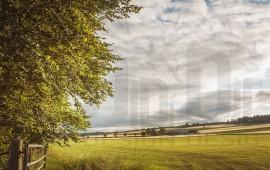 Paesaggio campagna