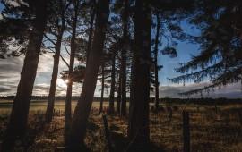 Paesaggio bosco