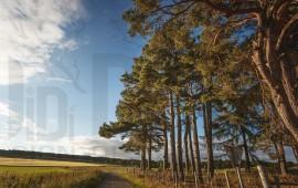Paesaggio campagna Scozia